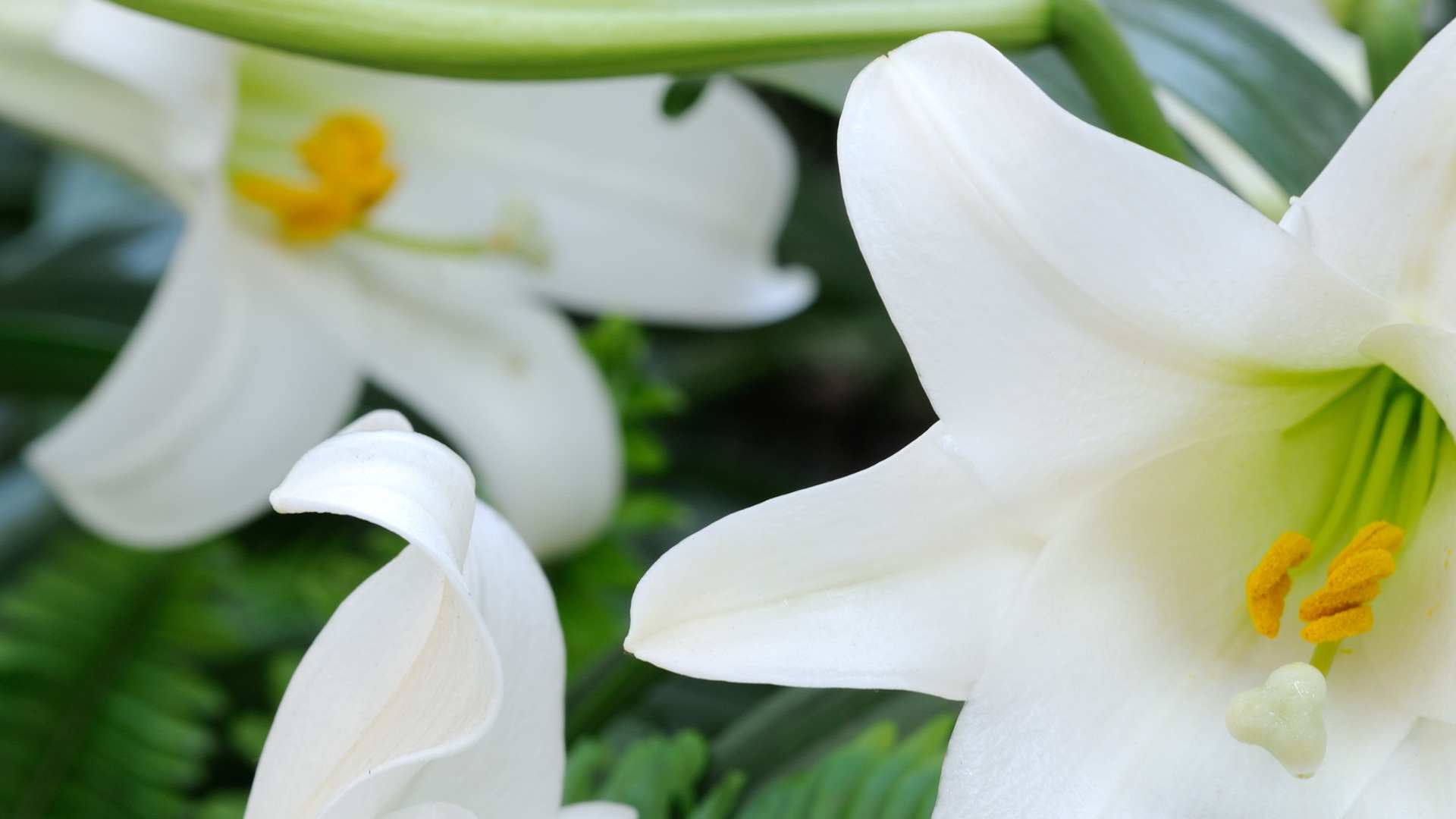 easter-lilies_872