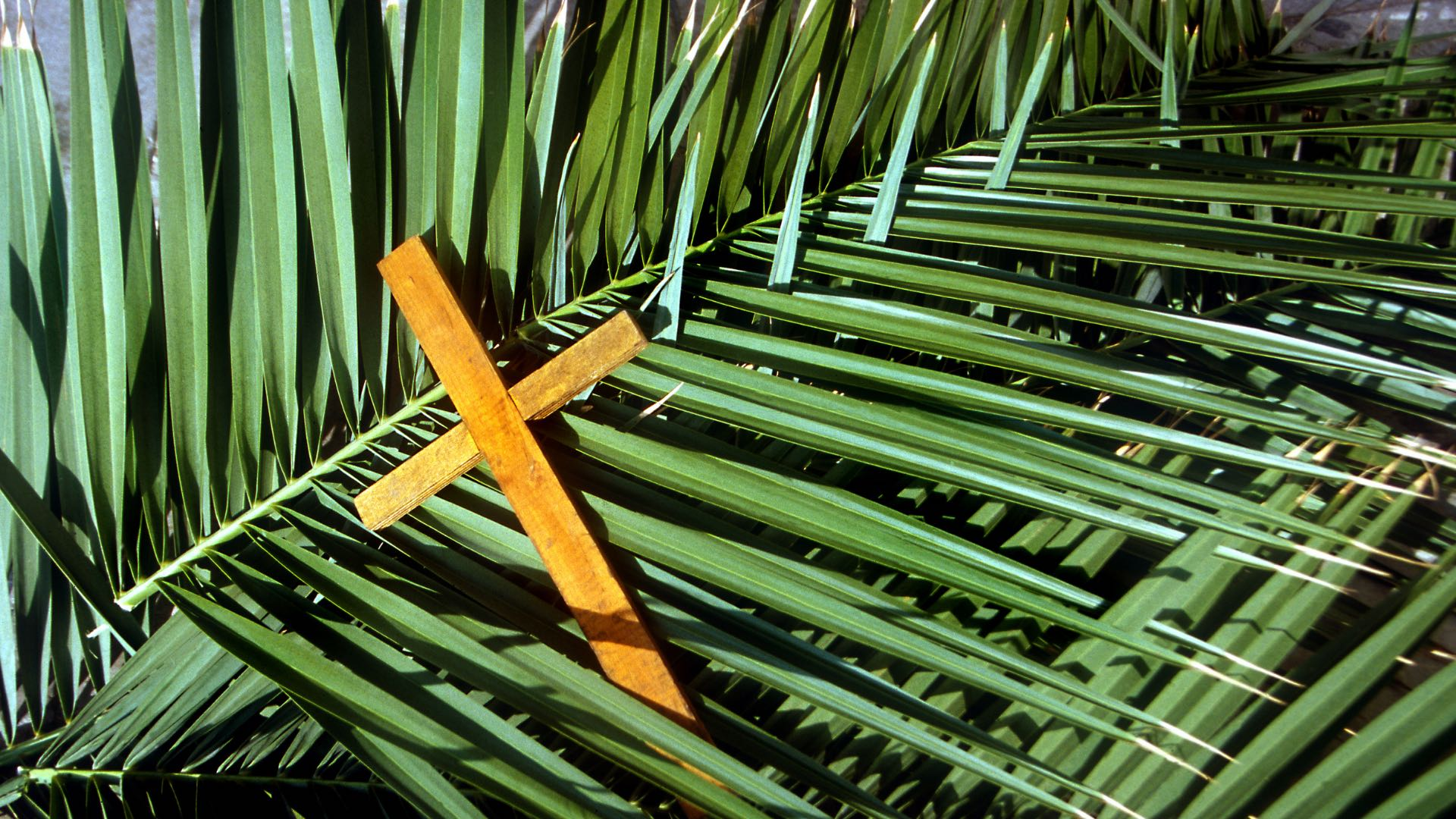 palms-with-cross_675